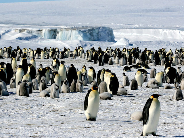 قاره قطب جنوب