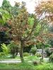 باتومی - باغ گیاه شناسی