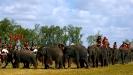 هند-جشن فیل ها