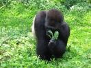 جاکارتا-باغ وحش راگونان