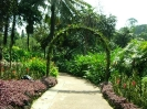 بالی - باغ گیاهشناسی