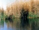 کازرون - دریاچه پریشان -