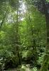 جنگل دیلمان_1