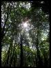 جنگل النگدره_10