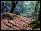 جنگل النگدره_4