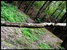 جنگل النگدره_6