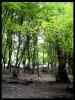 جنگل النگدره_8