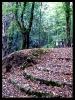 جنگل النگدره_9