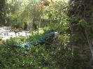 باغ پرندگان_18