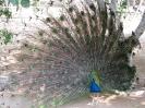 باغ پرندگان_3