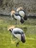 باغ پرندگان_7
