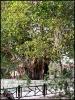 درخت سبز_12