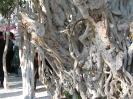 درخت سبز_4