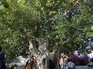 درخت سبز_8