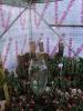 باغ گلها_10