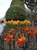 باغ گلها_12