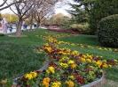 باغ گلها_13