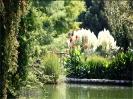 باغ گلها_19