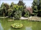 باغ گلها_24