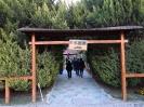 باغ گلها_4