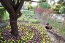 باغ گلها_9