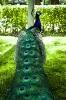 باغ پرندگان_14