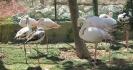 باغ پرندگان_1