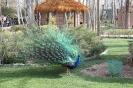 باغ پرندگان_36