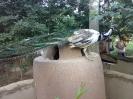 باغ پرندگان_39