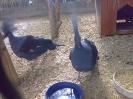 باغ پرندگان_40