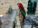 باغ پرندگان_47