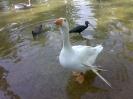 باغ پرندگان_4