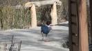 باغ پرندگان_56