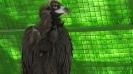 باغ پرندگان_64