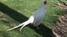 باغ پرندگان_65