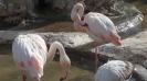 باغ پرندگان_67