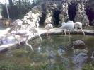 باغ پرندگان_6