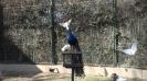 باغ پرندگان_72