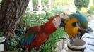 باغ پرندگان_77