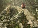باغ پرندگان_87
