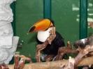باغ پرندگان_92