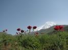 آمل - قله دماوند - _6