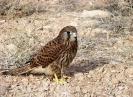 جاجرم - منطقه حفاظت شده حیات وحش میاندشت -