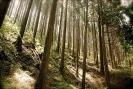 توکیو - پارک ملی فوجی هاکونه ایزو
