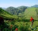 پاهانگ - کامرون هایلندز