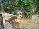 کوالالامپور - پارک آهو (Deer Park)