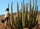 مکزیک - کویر باها (باخا) کالیفرنیا