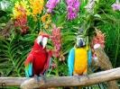 سنگاپور- پارک پرندگان Jurong