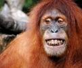 سنگاپور - باغ وحش