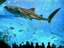 سنگاپور - آکواریم دنیای زیر آب